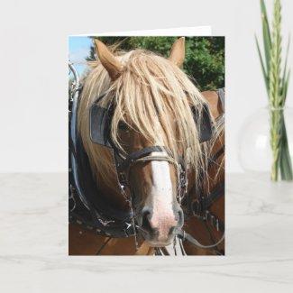 Belgian Horse card