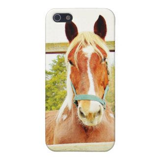 Belgian Horse Case For iPhone SE/5/5s