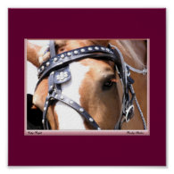 Belgian Horse Poster