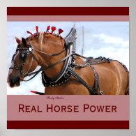 Belgian Horse Poster 1