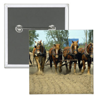 Belgian horses plowing, six-up, Red Top Farm, Cali Pinback Button