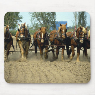 Belgian horses plowing, six-up, Red Top Farm, Cali Mouse Pad