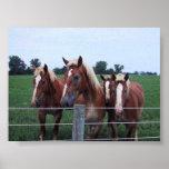 Belgian Horses Print