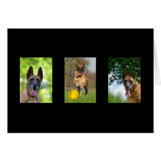 Belgian Malinois dog blank custom greeting card