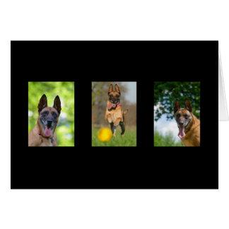 Belgian Malinois dog blank custom note card