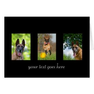 Belgian Malinois dog blank custom text card