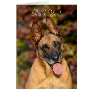 Belgian Malinois dog custom Thank You card