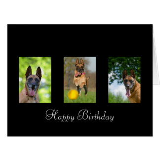 Belgian Malinois dog lovers custom birthday card