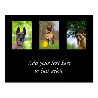 Belgian Malinois dog lovers photo custom postcard