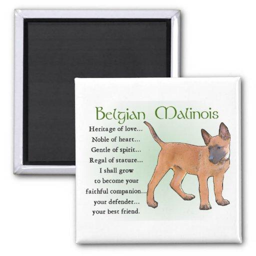 Belgian Malinois Gifts Refrigerator Magnet