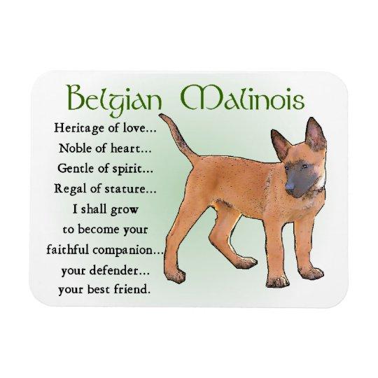 sticker pet animal breed puppy I love my BELGIAN MALINOIS dog heart decal