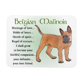 Belgian Malinois Heritage of Love Rectangular Photo Magnet