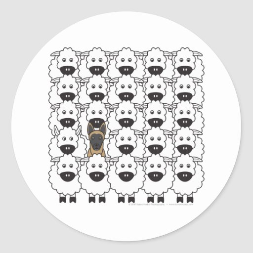 Belgian Malinois in the Sheep Round Stickers