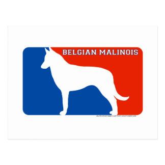 Belgian Malinois Major League Dog Postcard