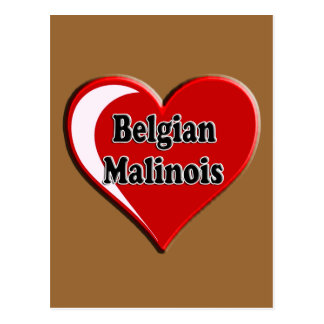 Belgian Malinois on Heart for dog lovers Postcard