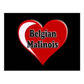 Belgian Malinois on Heart for dog lovers Postcard