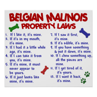 BELGIAN MALINOIS PL2 POSTER