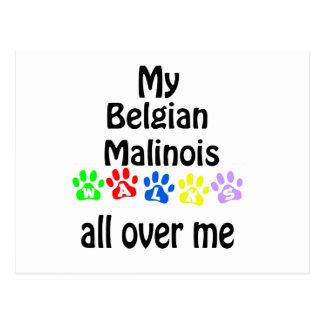 Belgian Malinois Walks Design Postcard