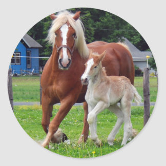 belgian Mare and Filly Classic Round Sticker