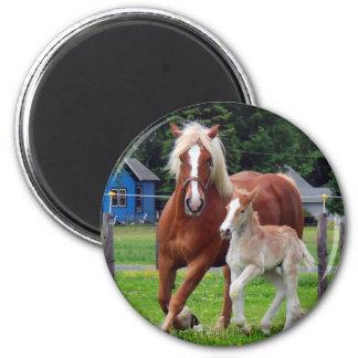 belgian Mare and Filly Magnets