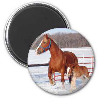 Belgian Mare and Filly Magnet