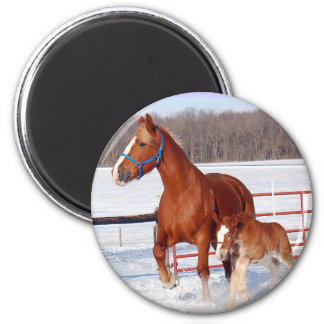 Belgian Mare and Filly Refrigerator Magnets