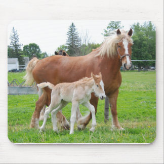 Belgian Mare and Filly Mouse Pad