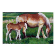 Belgian Mare and Foal Horse Portrait Poster