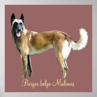 Belgian poster shepherd malinois