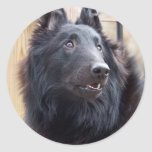 Belgian Sheepdog Classic Round Sticker