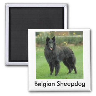 Belgian Sheepdog Magnet