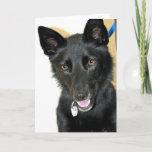 Belgian Sheepdog-Shepherd Card