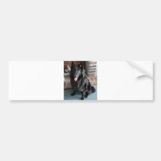 "Belgian Shepherd aka ""The Black Wolf"" Bumper Sticker"