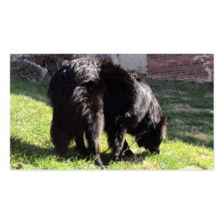"Belgian Shepherd aka ""The Black Wolf"" Business Card"