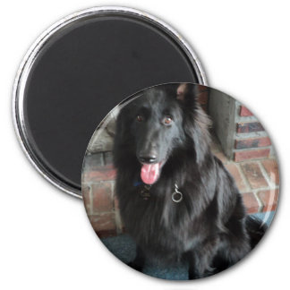 "Belgian Shepherd aka ""The Black Wolf"" Magnet"