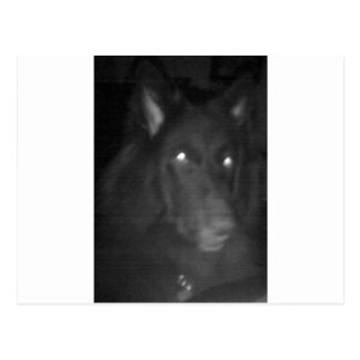 "Belgian Shepherd aka ""The Black Wolf"" Postcard"