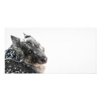 Belgian Shepherd in Snow Photo Cards