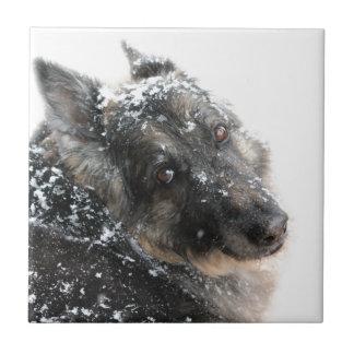 Belgian Shepherd in Snow Small Square Tile