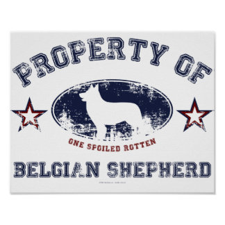 Belgian Shepherd Poster