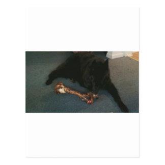 "Belgian Shepherd with a Bone aka ""The Black Wolf"" Postcard"