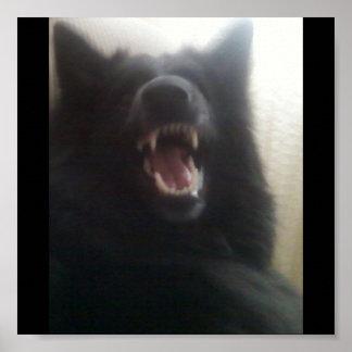 "Belgian Shepherd's Teeth aka ""The Black Wolf"" Poster"