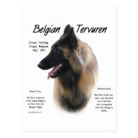 Belgian Tervuren Meet the Breed Postcard