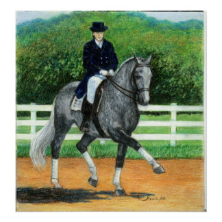 Belgian Warmblood Dressage Horse Portrait Poster