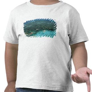 Belice, barrera de arrecifes, filón del faro, azul camiseta