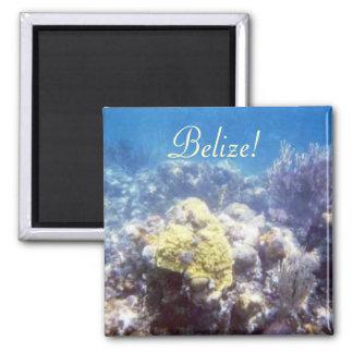 ¡Belice! Imán del arrecife de coral