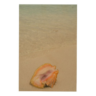Belice, mar del Caribe, el filón del guantero. Cuadro De Madera