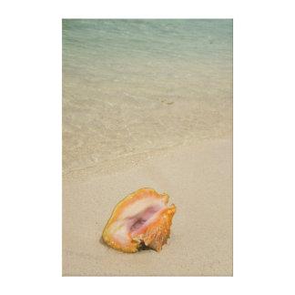 Belice, mar del Caribe, el filón del guantero. Impresión En Lienzo