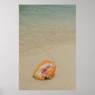 Belice, mar del Caribe, el filón del guantero. Póster