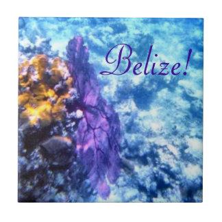 ¡Belice! Teja púrpura de la fan de mar