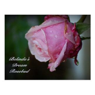 Belinda's Dream Rosebud Postcard